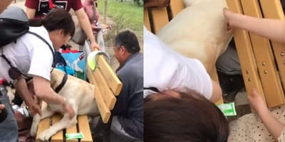 A crowd of people and dogs surround dog stuck in bench