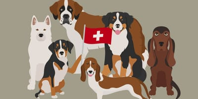 Karikaturen Schweizer Hunderassen