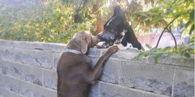 Dogs saying hello to each other