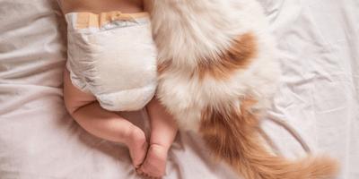 ¿Un bebé puede tener alergia a los gatos?