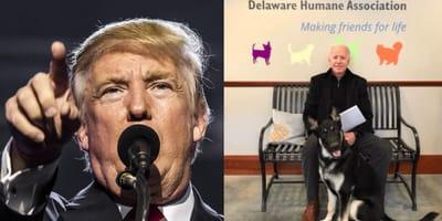 Trump kontra Biden: czy psy zadecydują o zwycięstwie?