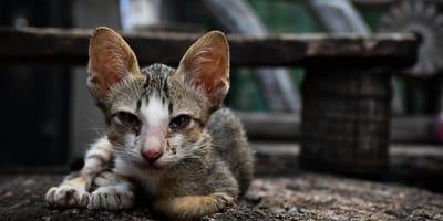 Salva la vida de una gata: un mes después no puede contener su furia