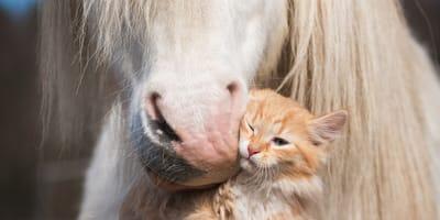 gato y caballo beso