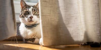 Cómo hacer que un gato se adapte a su nueva casa