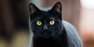 Black cat in the bath
