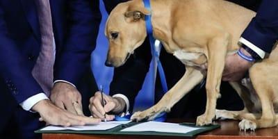 politici e cane