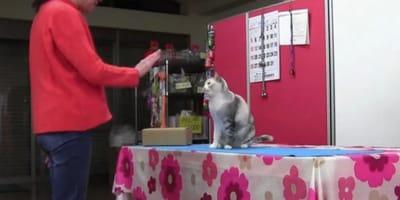 Kot i opiekunka trenują