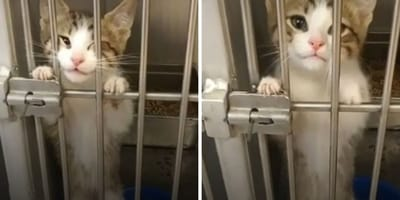 Gatito llora desconsolado en el refugio: sus maullidos atraviesan el corazón