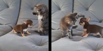 Kociak i szczeniak we wspólnej zabawie: słodsze niż walentynkowe czekoladki! (VIDEO)