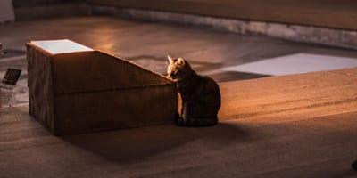 Opiekun umiera: kotka żegna go we wzruszający sposób (VIDEO)