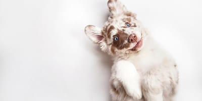 100 Disney dog names: Ultimate list of Disney-inspired names