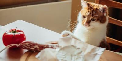 gato mesa de comida