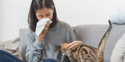 Alergia na koty - jak sobie z nią poradzić?