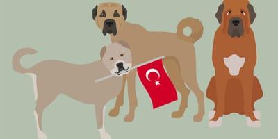 Karikaturen türkischer Hunderassen