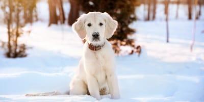Immunsytem beim Hund stärken: Welpe sitzt im Schnee