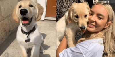 Owner can't stop laughing when she takes a closer look at picture of her dog