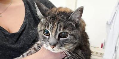 """Gattino compie 15 anni, come """"regalo"""" decidono di sopprimerlo"""