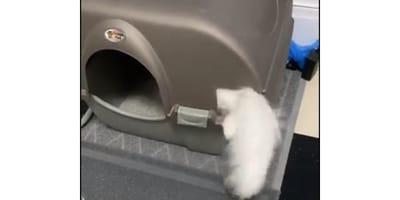 Kot zapomniał, jak korzystać z kuwety i efekt jest przekomiczny (VIDEO)