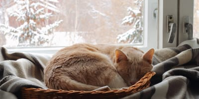 How to keep a cat warm in the winter