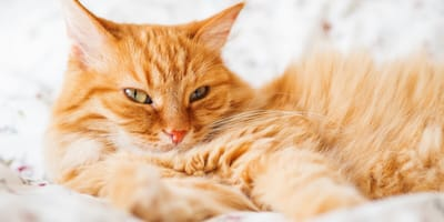 Ginger cats are the friendliest, according to science