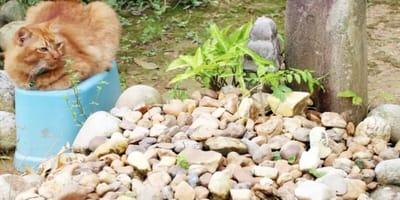 gato naranja atigrado visita cementerio dueño