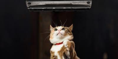 gato asustado aspiradora