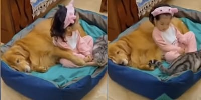 toddler napping with a cat and dog