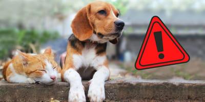 cane-con-segnale-stradale-attenzione