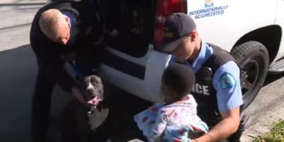 Pasea a sus perros y se cruza con un bebé y un Pitbull: la reacción del perro la deja en shock