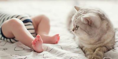 C'è il rischio di allergia al gatto nei neonati?