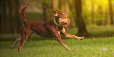 Gelenkfutter für Hunde: Die richtige Ernährung für starke Gelenke