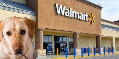 Perro Walmart Merida