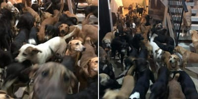 Hurricane Delta: Mexican man spontaneously opens his door to 300 stray dogs