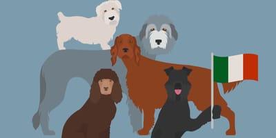 Setter, Wolfshunde und blaue Terrier: Irische Hunderassen