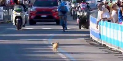 cane-e-ciclista-e-pubblico