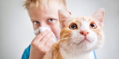 ¿Qué causa la alergia a los gatos?