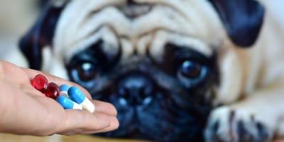 ¿Qué antibióticos se le pueden dar a los perros sin receta?