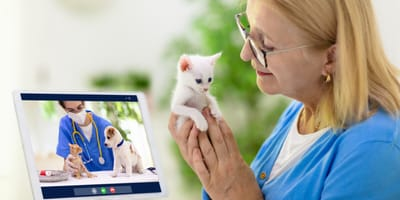 Free vet consultations online with this special promo code