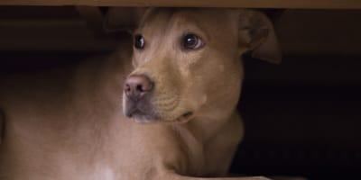 Stres u psa - jakie są objawy i jak go złagodzić?