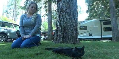 gato negro cesped