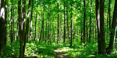 Woman hears whimpering sounds in forest, then suddenly sees the ground move