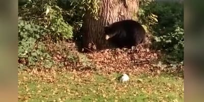 Jack Russel Terrier i niedźwiedź