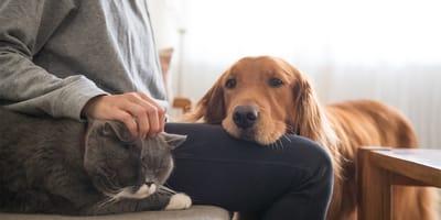 dueño gato y perro