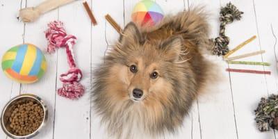 ¿Cuáles son los mejores juguetes para perros?