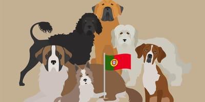 Karikatuur van verschillende Portugese hondenrassen