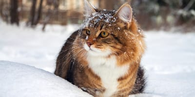 How to protect your cat this winter