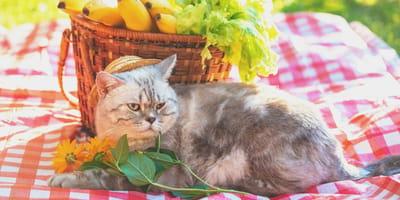 gatto-allergico-con-cibo