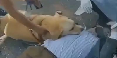 Man faints in the middle of the street: His dog's reaction breaks the heart of millions