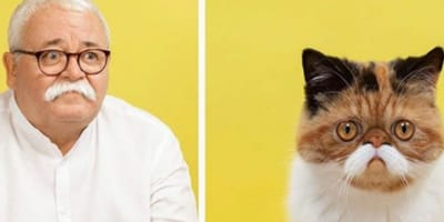 Hilarious new card game proves that pet owners look just like their cats