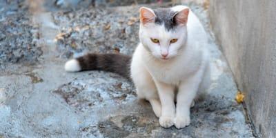 Sus humanos fallecieron y la familia hizo algo innombrable con esta gatita